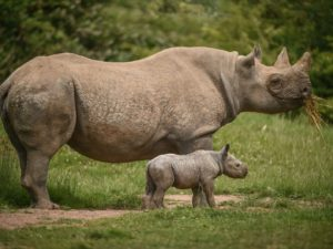 Chester Zoo named world's third best zoo by TripAdvisor