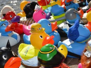 Corporate Ducks are winging their way out and about