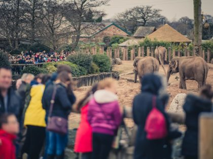 Visitor numbers to Chester Zoo hit record high