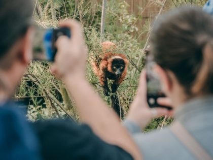 Chester Zoo welcomes ONE MILLION visitors in record time