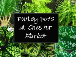 Purley Pots – Delivery of plants and shrubs